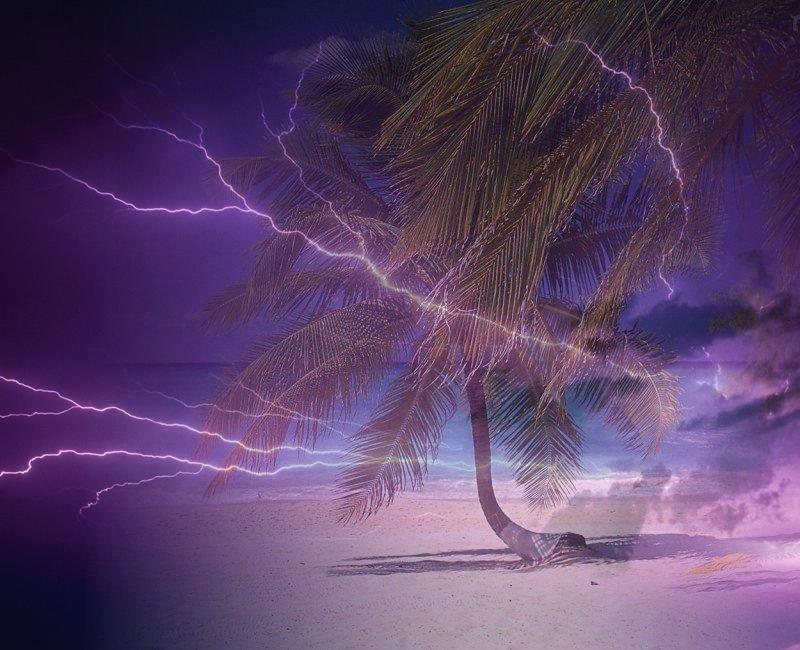 palmy i burza