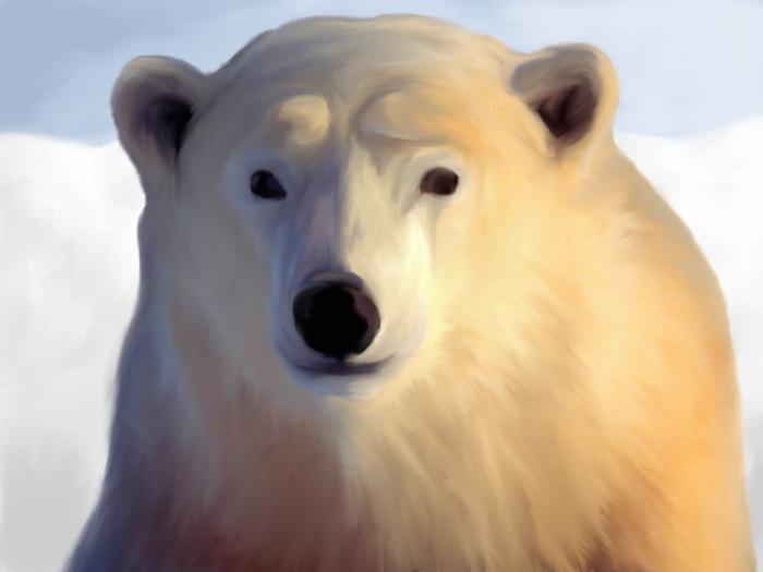 dźwiedź polarny