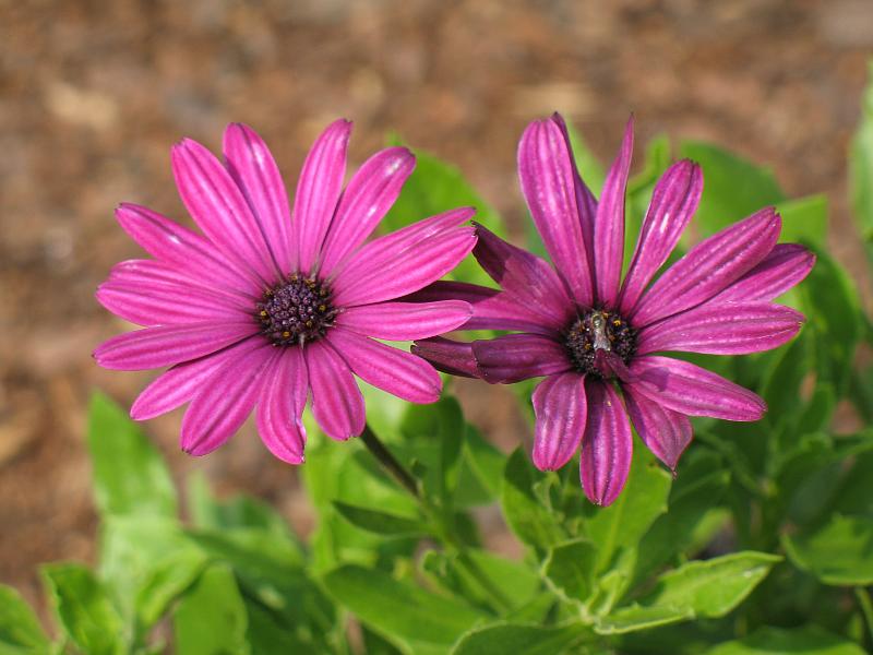 Kwiaty MACRO