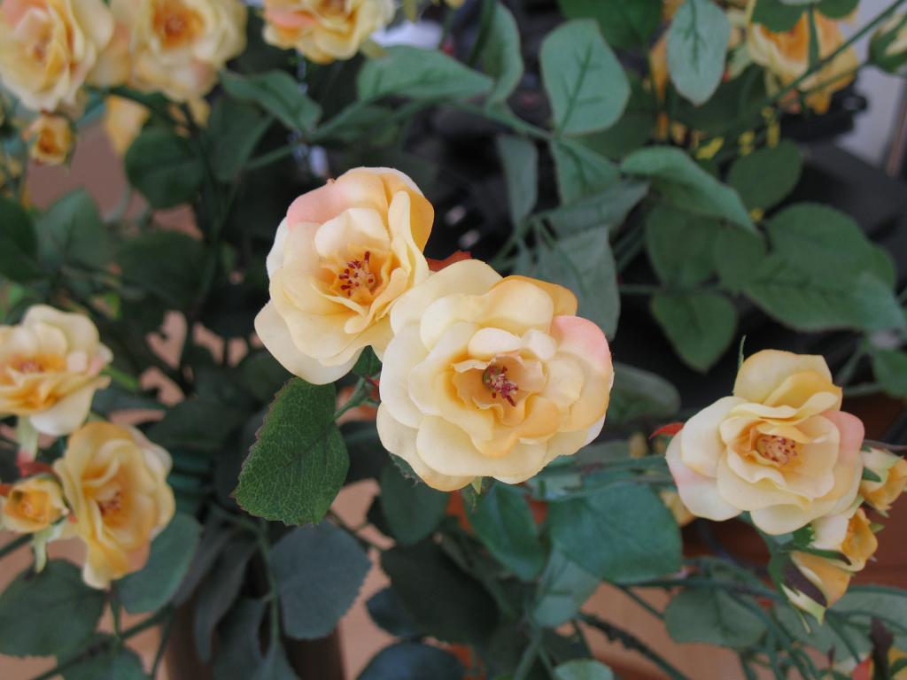 Kwiat MACRO