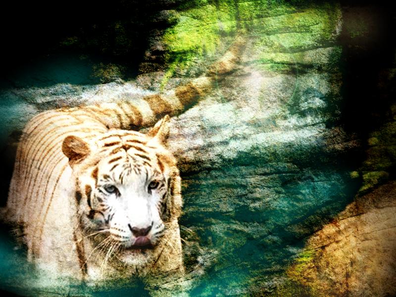 Tygrys :)