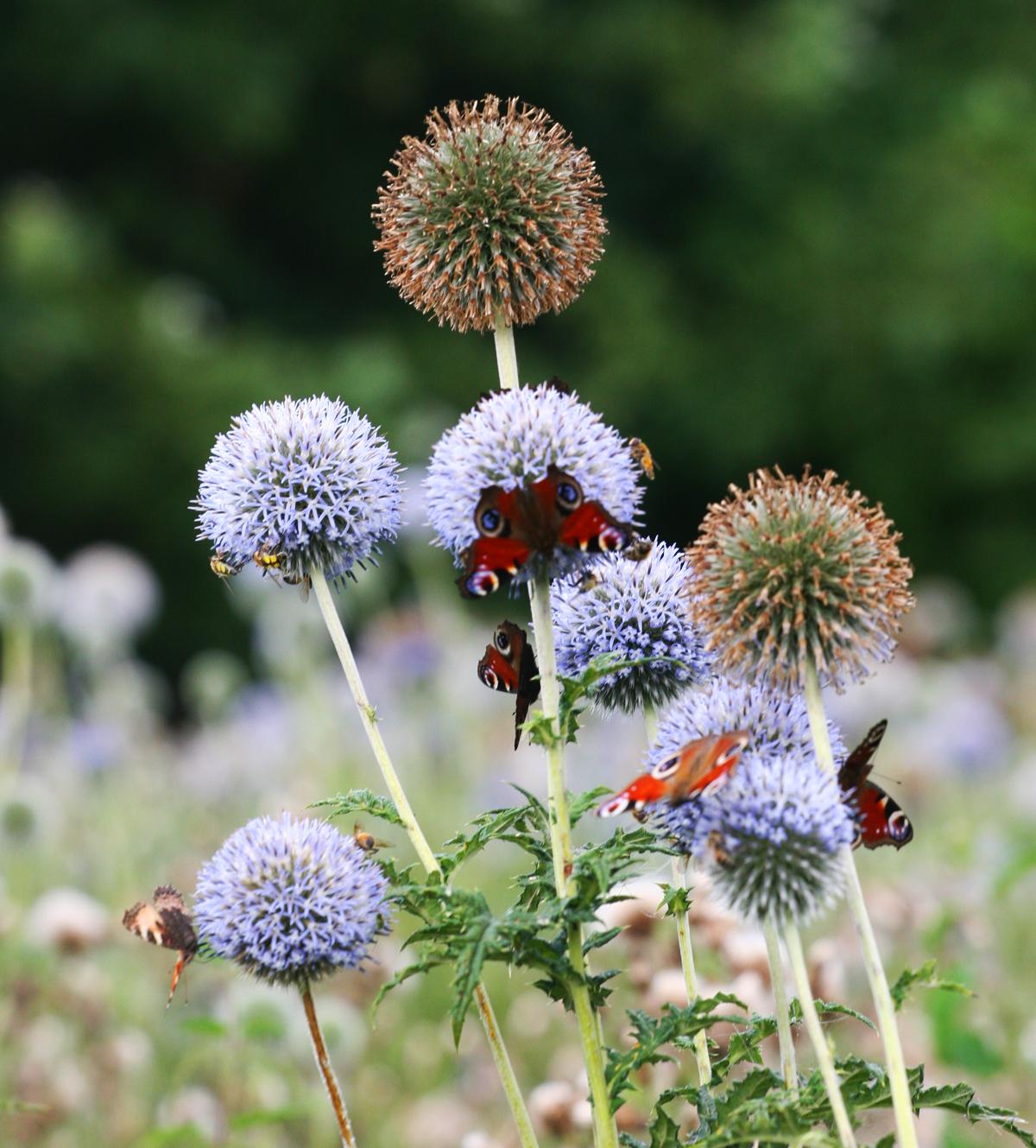 Motyle i pszczoły