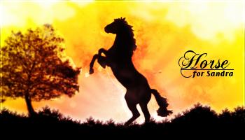 Horse for Sandra