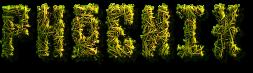 phoenix liściasty