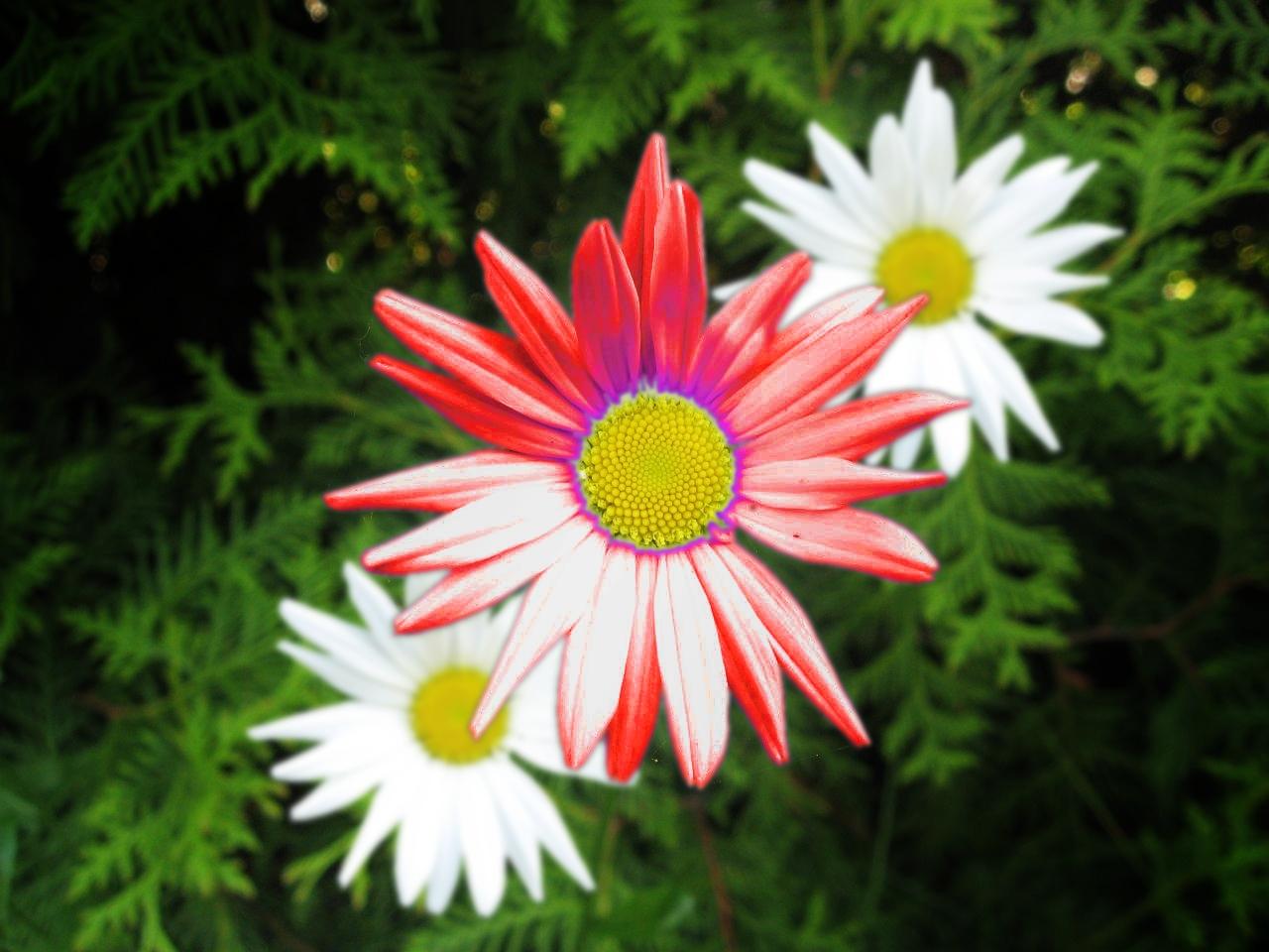 Taki oto kwiatek