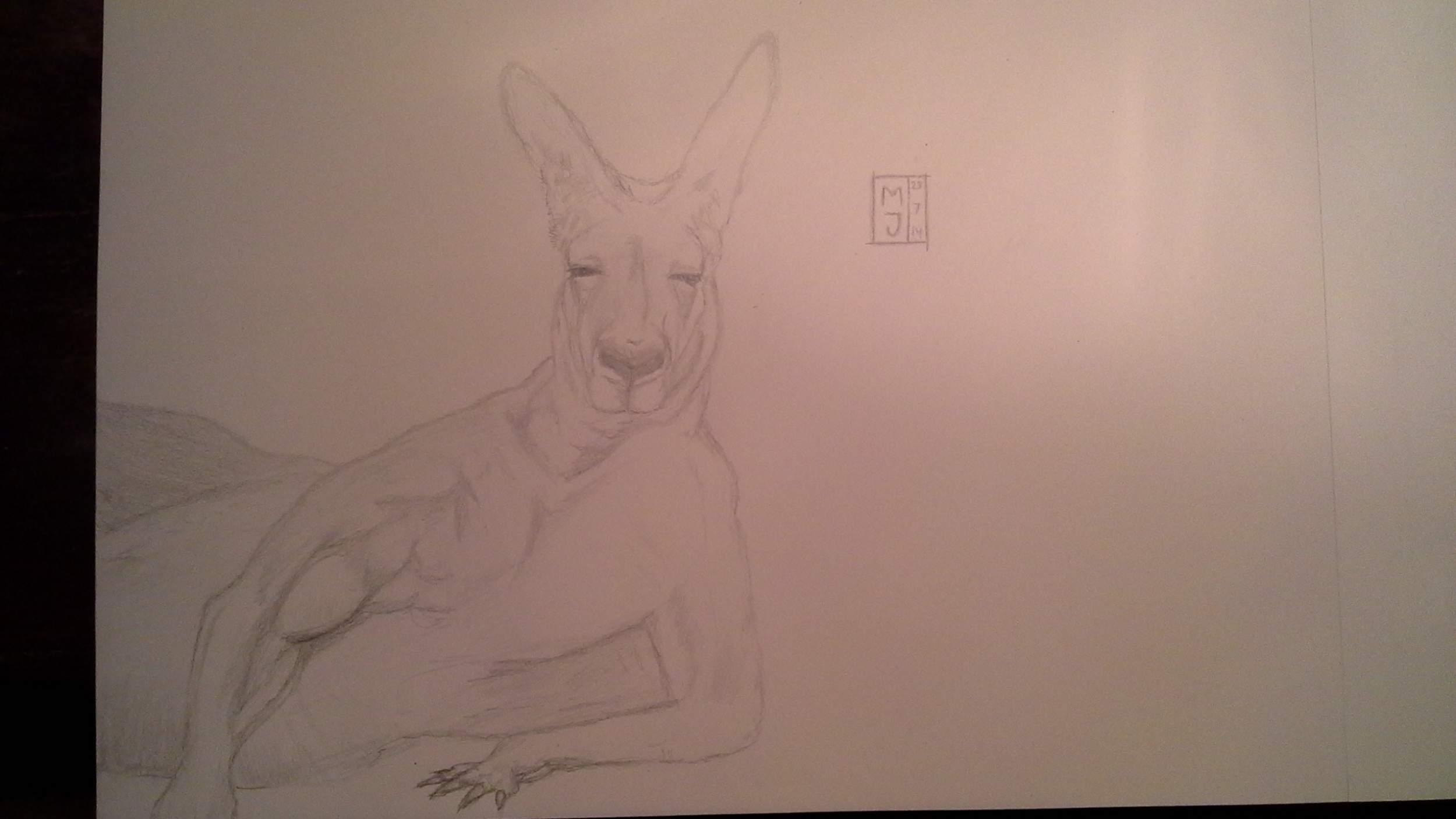 Kangur 3