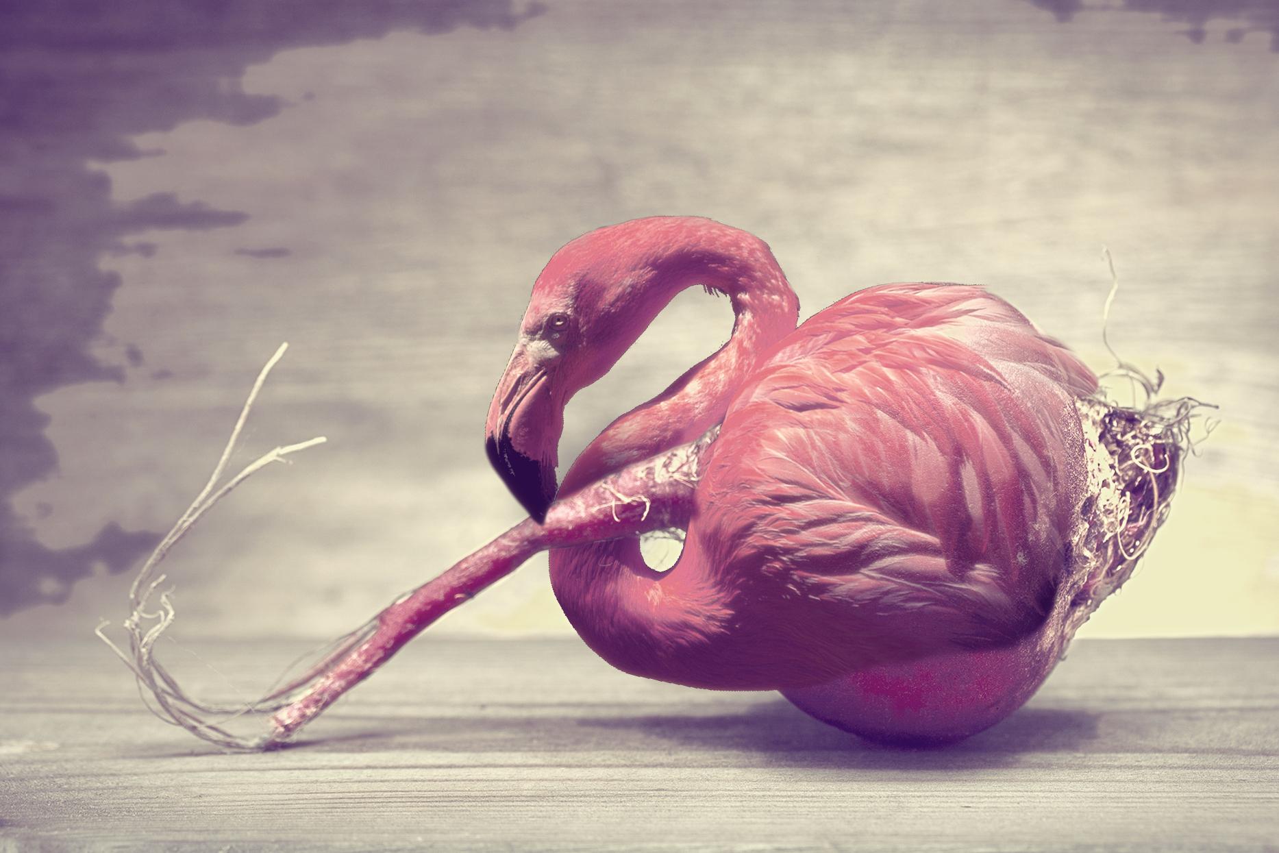 Kompozycja flaminga